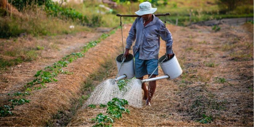 カメルーンの農業のイメージ